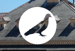 ALLONTANAMENTO VOLATILI piccioni e colombi